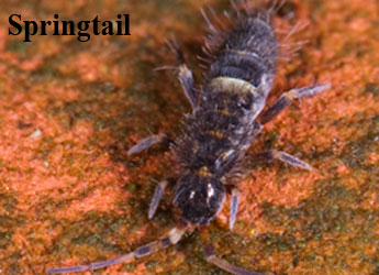 Fort Collins Bed Bug Control
